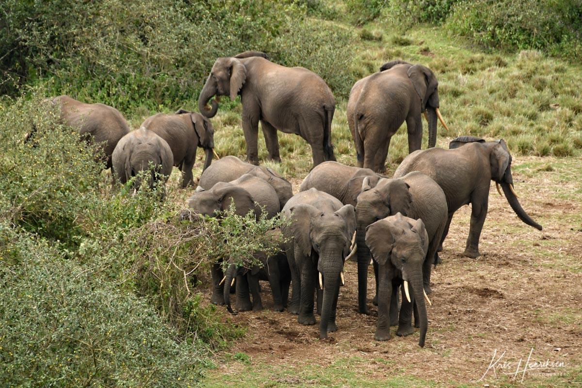 Elefanter Aberdare