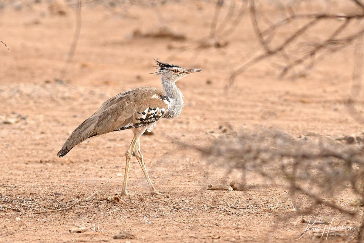 Kori Samburu