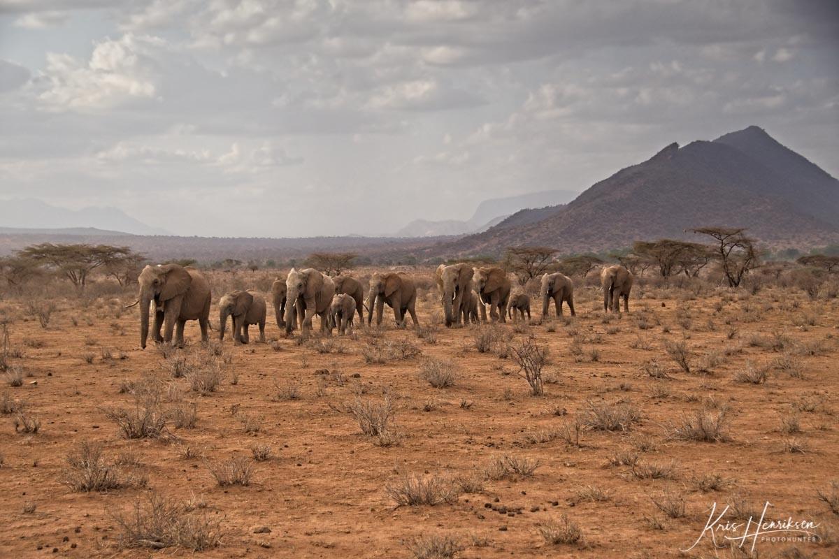 Elefanter Samburu