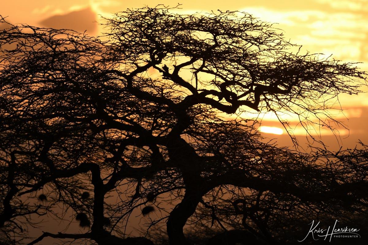 Solnedgang Samburu