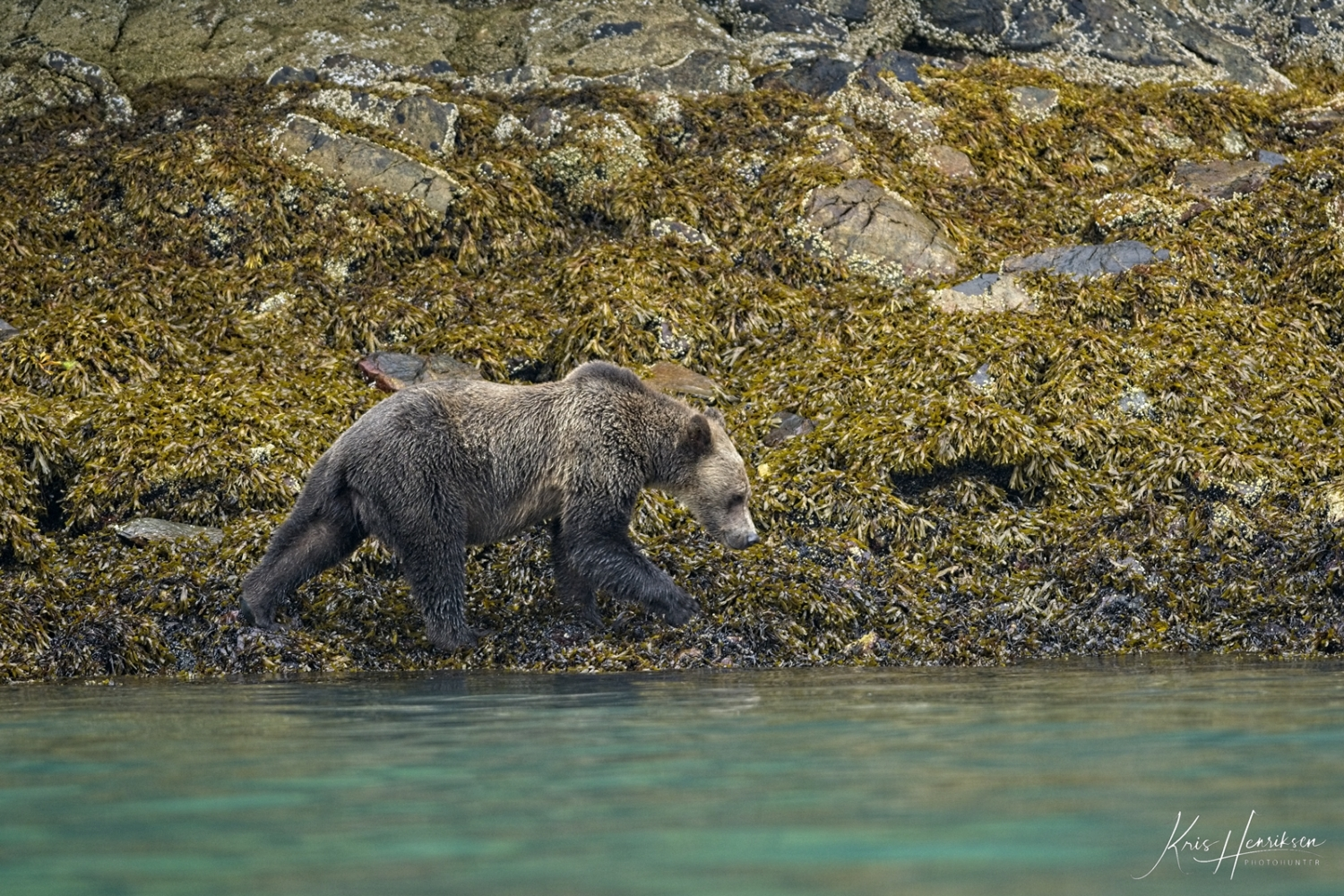Grizzly Knight Inlet 2