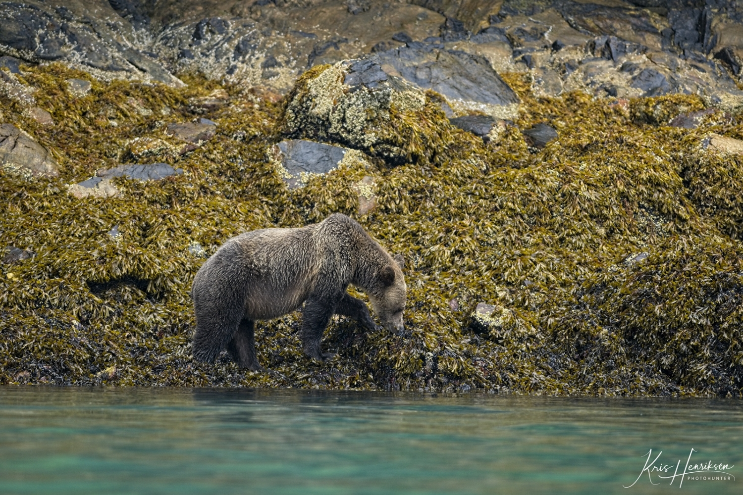 Grizzly Knight Inlet 3